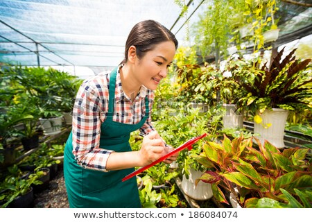 Positive smiling asian young woman with green plant leaf. Stock photo © deandrobot