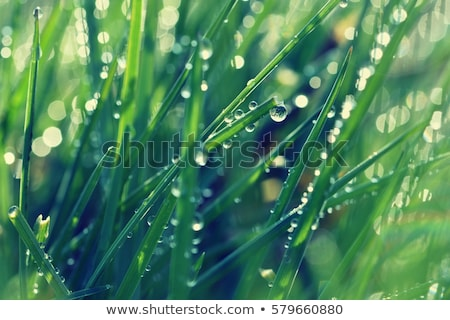 green grassland detail Stock photo © prill
