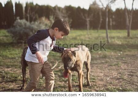 積極的な · 羊飼い · 肖像 · 屋外 · 犬 - ストックフォト © cynoclub