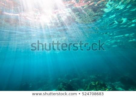 острове · подводного · иллюстрация · мнение · дерево · рыбы - Сток-фото © mythja