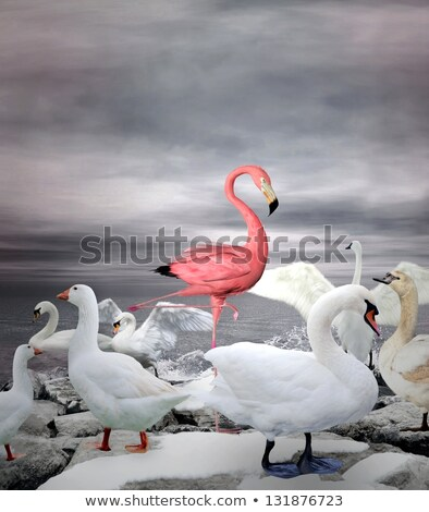 Stock photo: Flamingo Standing In The Lake