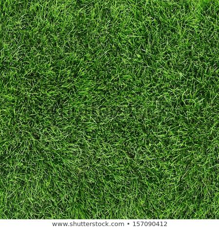 green grass seamless texture stock photo © tashatuvango