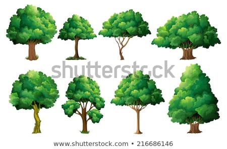 Corteza diferente árboles aislado blanco textura Foto stock © alekleks