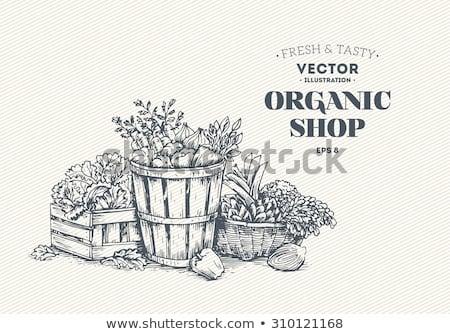 Owoców koszyka typografii wektora sztuki lata Zdjęcia stock © gubh83