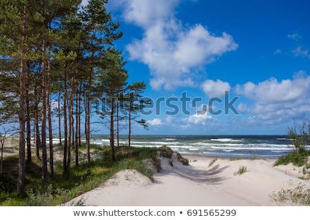 ストックフォト: 美しい · 風光明媚な · 表示 · バルト海 · パノラマ · 嵐