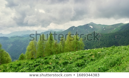 Green forest before the storm Stock photo © azjoma