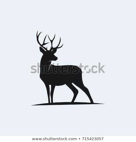 Geyik hayvan yaban hayatı memeli doğal tür Stok fotoğraf © scenery1