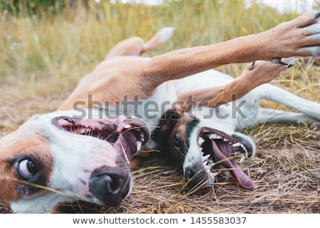 Dynamic Mixed-Breed Dog Stock photo © buchsammy