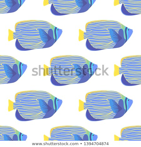 Imperial Anglefish Closeup in Saltwater Aquarium Stock photo © aetb