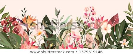 Tropische bloemen grens helling strand Stockfoto © adamson