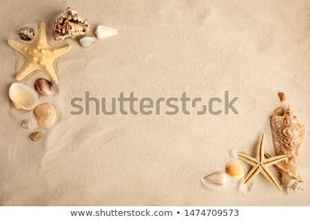 Kagylók part folyó égbolt fény terv Stock fotó © feelphotoart