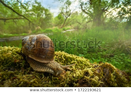 Photo stock: Jardin · escargot · naturelles · habitat
