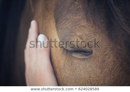 wild horses close up stock photo © castenoid