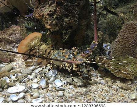 ライブ ロブスター 市場 魚 調理 新鮮な ストックフォト © BarbaraNeveu