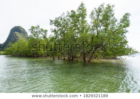 Soorten boom water zee park Thailand Stockfoto © Yongkiet