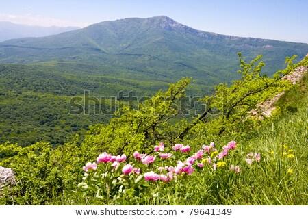 nice crimean landscape in summer stock photo © lypnyk2