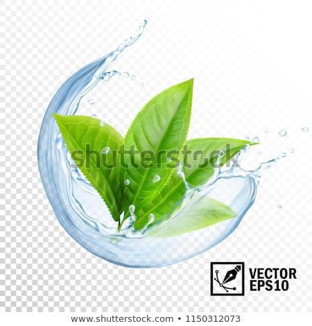 холодно зеленый чай лист лет льда чай Сток-фото © art9858