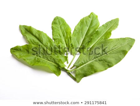 fresh sorrel leaves stock photo © saharosa