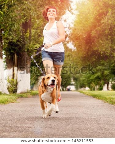 mulher · caminhada · cachorro · bonitinho · bigle - foto stock © nenetus