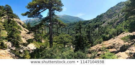 Cascade des Anglais waterfall near Vizzavona in Corsica stock photo © Joningall