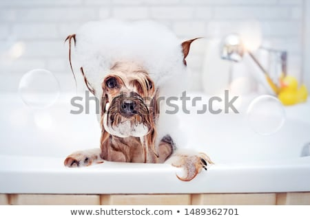 Luxurious bubble bath Stock photo © iko