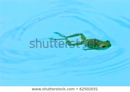 úszómedence kettő üres természet levél narancs Stock fotó © O_Lypa