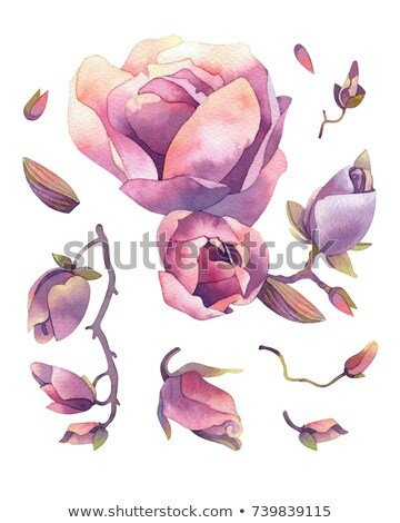 Pembe manolya çiçek düğme tomurcuk ağaç Stok fotoğraf © joyr