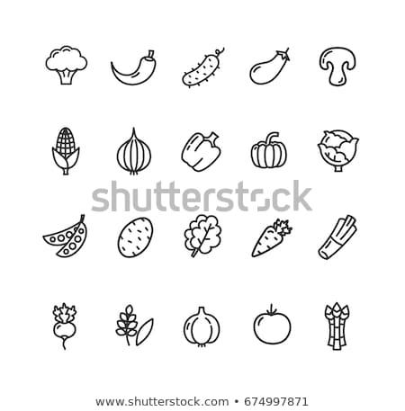 Concombre blanche réaliste isolé illustration cuisine Photo stock © ConceptCafe