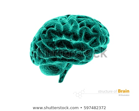 human brain x ray anatomy structure human brain anatomy 3d illustration isolated withe stock photo © tussik
