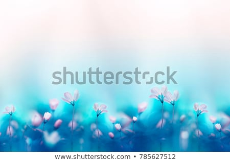 Nature Background With Grass Border And Text Spring Stock photo © adamson