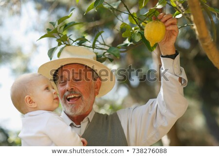 Grandfather showing lemon tree to baby Stock photo © IS2