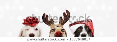 Christmas zwierzęta dekoracji ozdoba cute kot Zdjęcia stock © Lightsource
