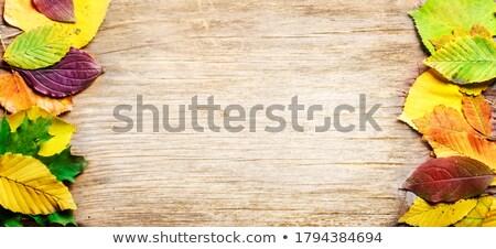 Rústico carvalho textura ver Foto stock © stevanovicigor