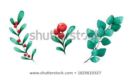Botanical illustration of a sprig of berries Stock photo © kostins