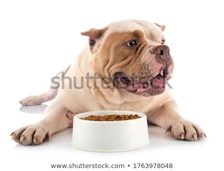 白 · アメリカン · 犬 · 楽しい · 子犬 · 男性 - ストックフォト © cynoclub