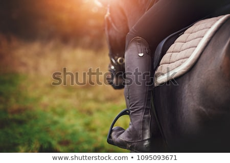 sitting horse and woman Stock photo © cynoclub