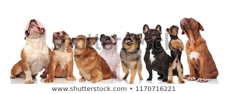 adorable large team of curious dogs on white background stock photo © feedough