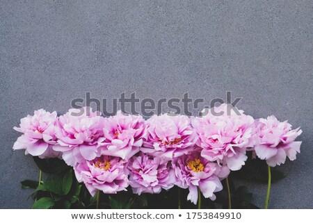 ピンク 緑の葉 グレー 具体的な スペース 文字 ストックフォト © artjazz