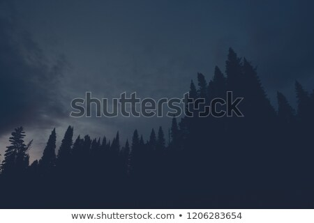 Eerie Silhouette Forest In Blue Night Sky Stock photo © swatchandsoda
