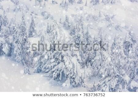 Nevadas lado blanco brillo oscuro Foto stock © romvo