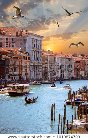 Seagulls and Grand Canal Stock photo © Givaga