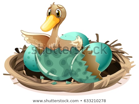 Ugly duckling hatching egg in nest Stock photo © colematt
