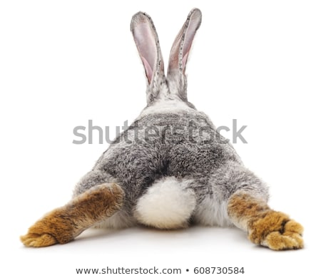 Cute gray rabbit hare isolated on white background Stock photo © MarySan