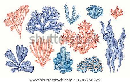 Coleção alga coral conjunto vintage vetor Foto stock © pikepicture