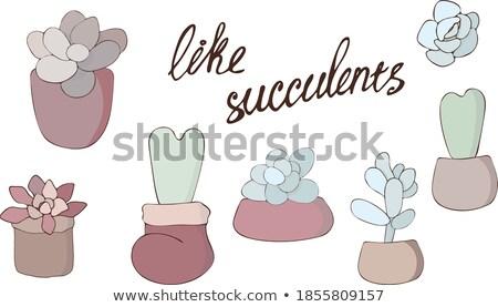 Szklarnia roślin zestaw odizolowany wektora stylu Zdjęcia stock © robuart