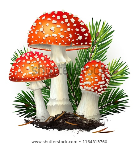 Red fly agaric (amanita muscaria) - symbol of autumn Stock photo © Kotenko