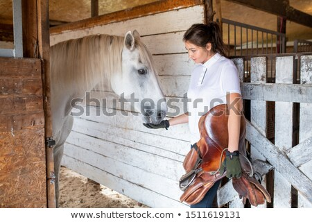 young sporty woman holding leather saddle while feeding white purebred racehorse stock photo © pressmaster