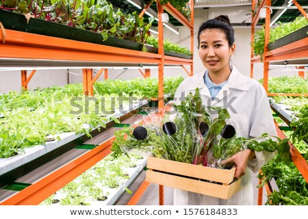 Young Asian greenhouse worker carrying wooden box with packed fresh green leaves Stock photo © pressmaster
