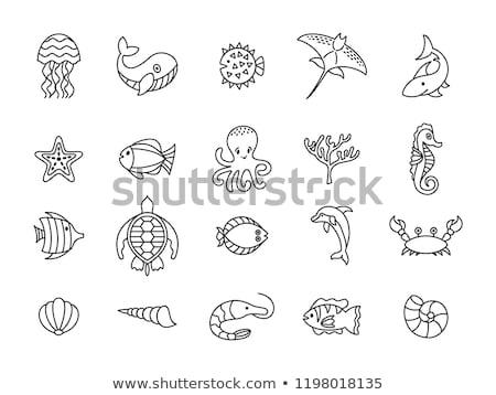 vicces · tengeri · állatok · feketefehér · vektor · rajz · izolált - stock fotó © kariiika
