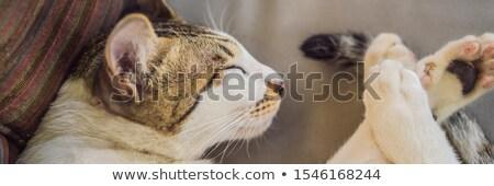 White cute cat sleeping on a sofa curled up BANNER, LONG FORMAT Stock photo © galitskaya